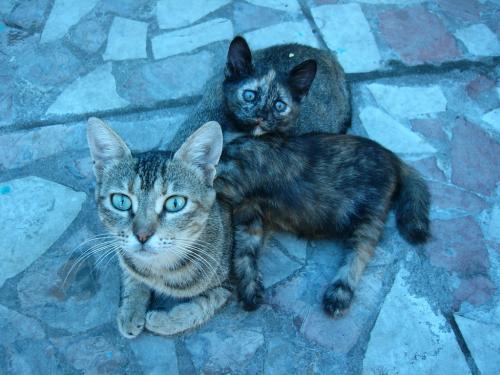 Сколько котов на картинке?