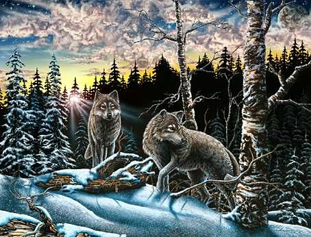 15 волков