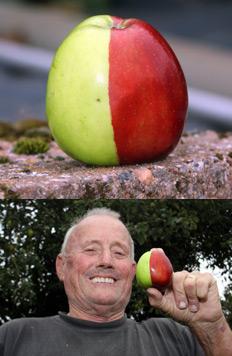 Необычное яблоко