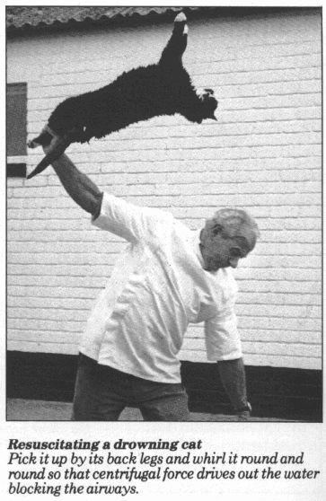 Реанимирование тонущей кошки