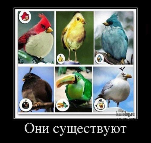 Angry Birds - они существуют в реальности