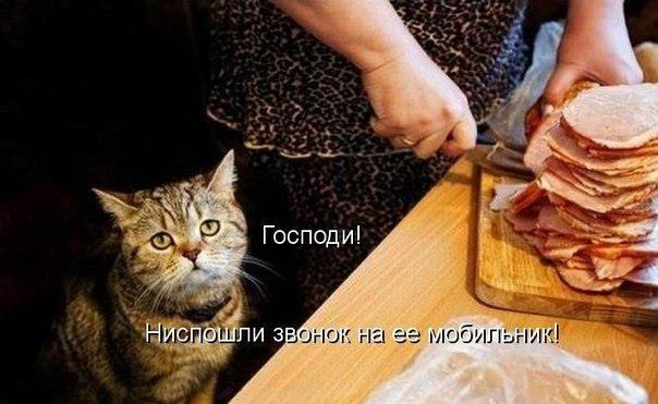 О чем молятся коты!