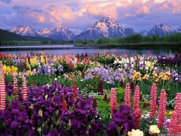 Гранд Тетон и полевые цветы. Вайоминг