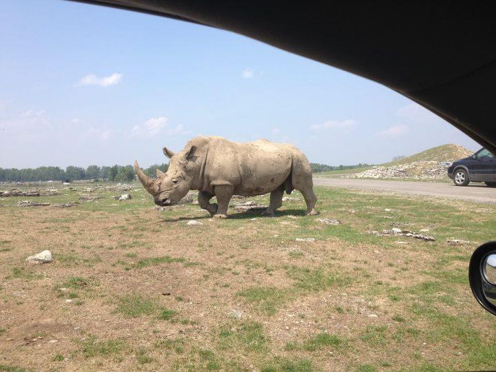 Носорог - вид из авто))