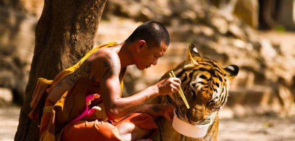 Совместный обед тигра и буддийского монаха