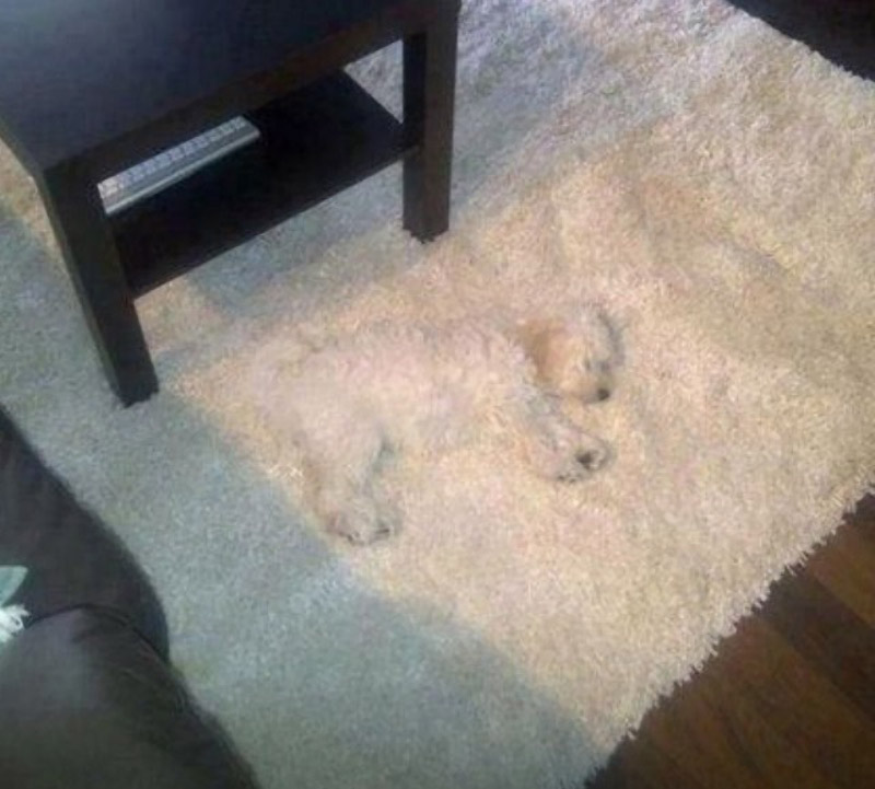 Пес под интерьер