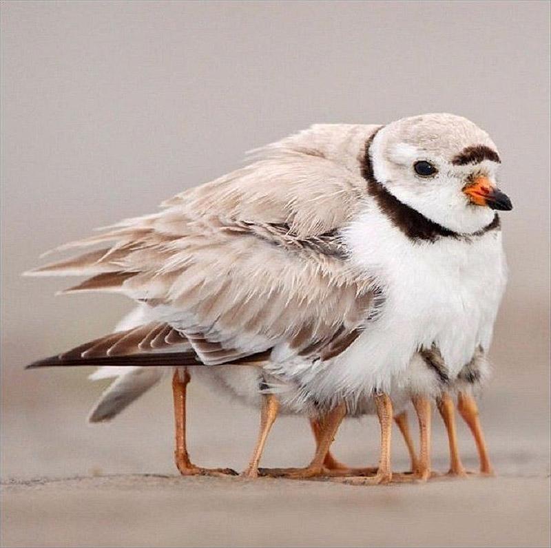Птица-многоножка