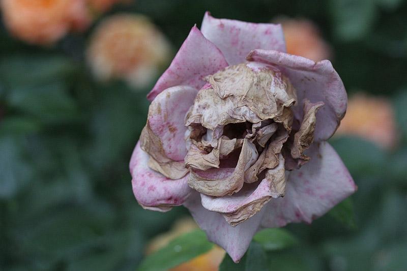 Цветок или череп?
