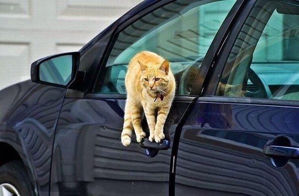 Кошачья ловкость