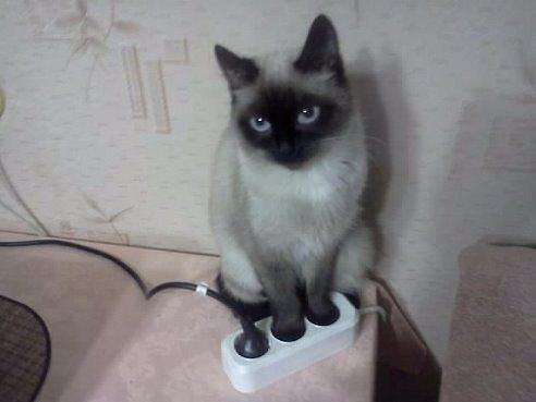 Кот на зарядке