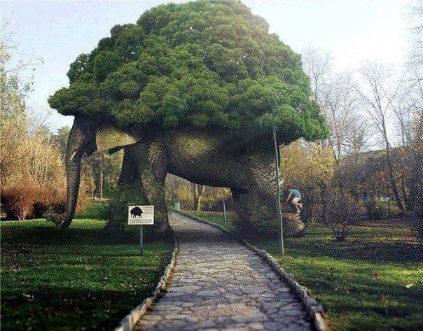 Дерево слон