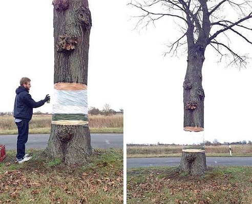 Дерево, висящее в воздухе