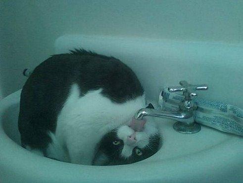 Котик-перевертыш