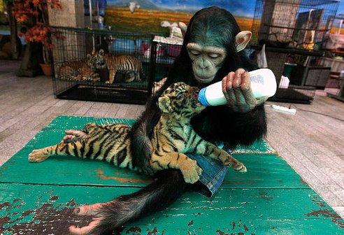 Заботливая мамочка