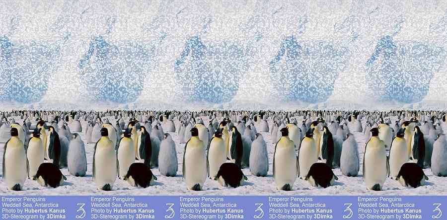 Стереограмма. Императорские пингвины