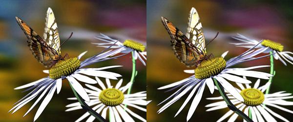 «Бабочка», Е. Глухарева г. Москва