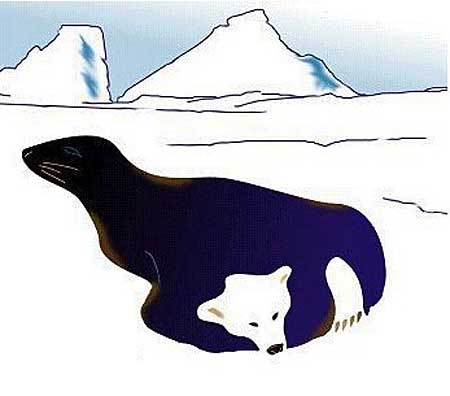 Медведь и морской котик