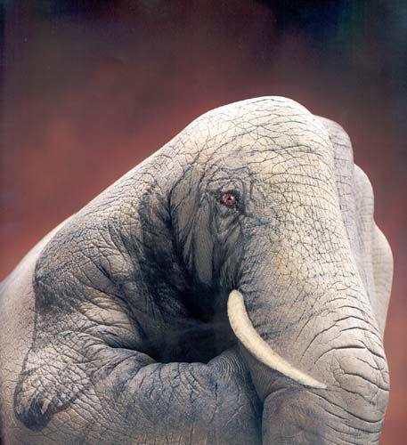Слоник на кулаке