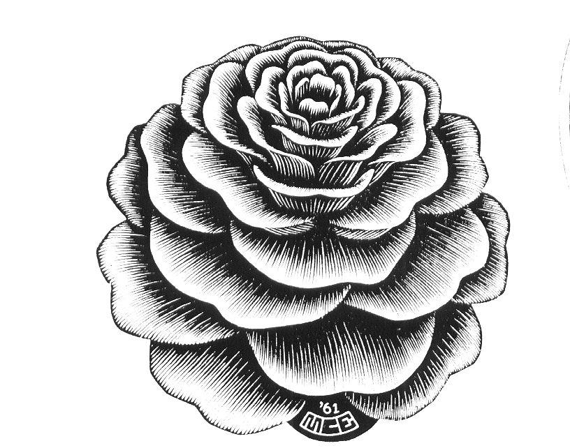 Роза. Эшер.