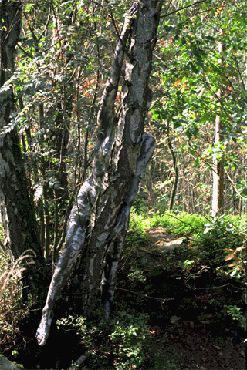 Найдите девушку в лесу