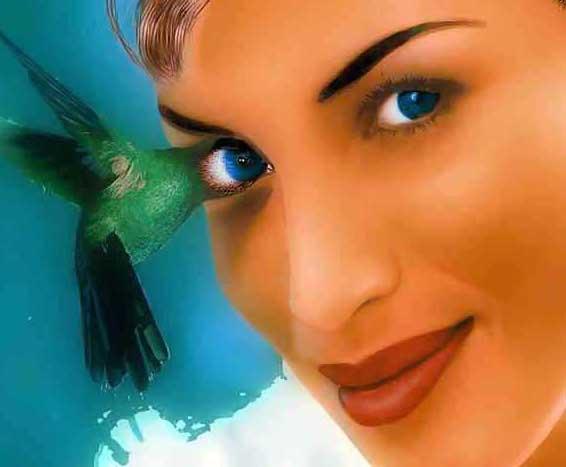Птица-глаз