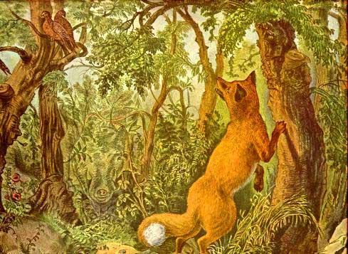 Лисица в лесу