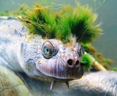 Черепаха-панк