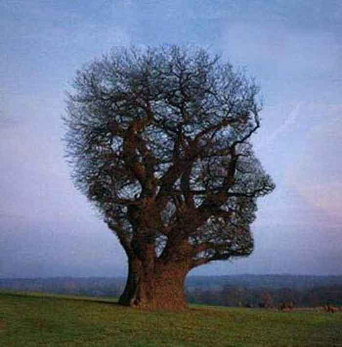 Дерево-голова