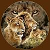 10 львов