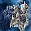 9 coyotes