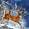11 deers
