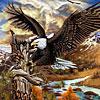 9 eagles