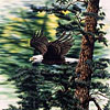 7 eagles