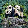 9 pandas