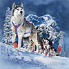 11 sled dogs