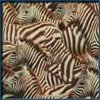Просто зебры