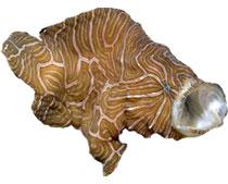 психоделическая рыба