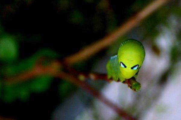 Микромир насекомые
