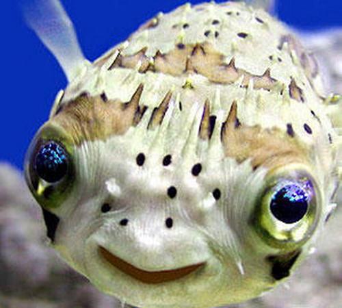 Рыбка с блестящими глазками. Вот такая она, безобидная, на первый взгляд