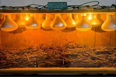 Прибор для сушки марихуаны в домашних условиях был найден во время полицейской облавы и теперь выставлен в музее.