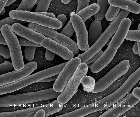 Вот таких червячков добавляют в биокефир