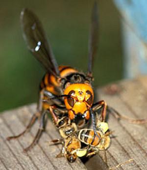 рис.3. Ужасные насекомые