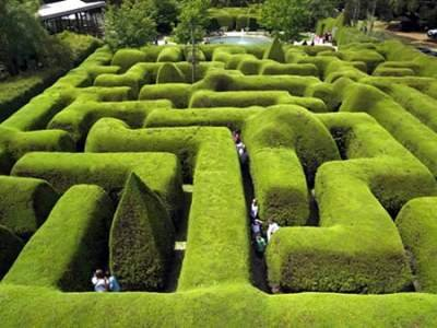 Ashcombe Maze (Австралия)