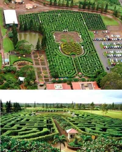 Pineapple Garden Maze (Гавайи)
