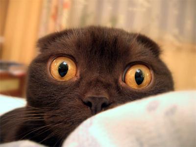 рис.1. Как напугать кота?