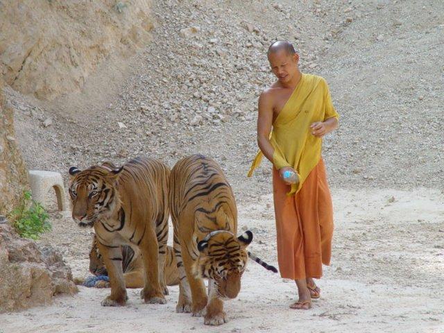 рис.16. Тигриный монастырь