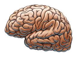 рис.1. Как обмануть собственный мозг