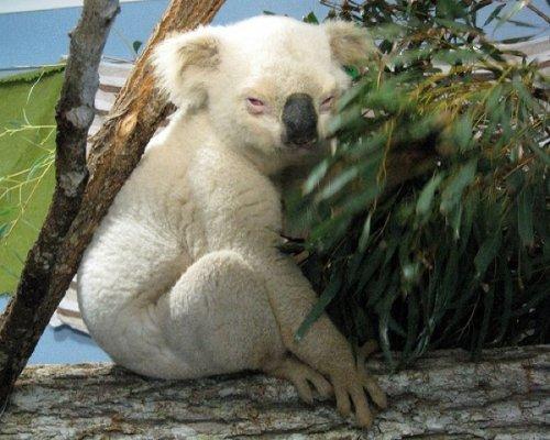рис.9. 10 удивительных животных-мутантов