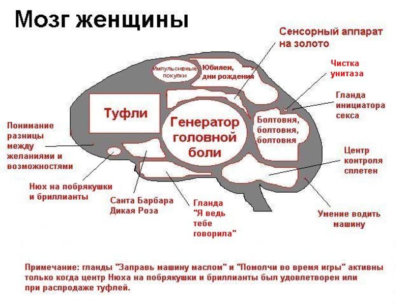 рис.3. Ученые объяснили мужской ум и женскую интуицию