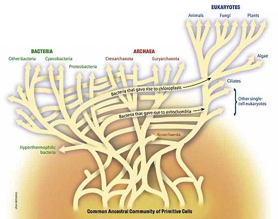 эволюционное древо